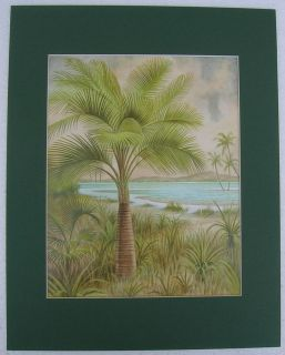 palm tree pictures in Home & Garden