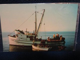 salmon fishing boats
