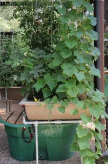 aquaponics grow bed in Gardening Supplies