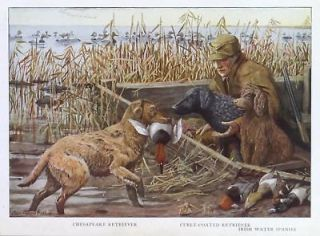 DOG Water Spaniel & Duck Hunter, Hunt 85+ Yr Old Print