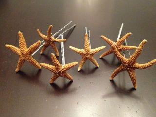 Real Starfish Hair Pins~Bridal Beach Wedding Veil Party Prom Dance