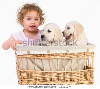Cute Baby Girl And Two Puppies In A Basket. Imagine Having To Keep An