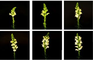 The Six Stages of the Snapdragons Life Cycle