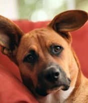 natural remedies for cats and dogs to relieve canine and feline anemia