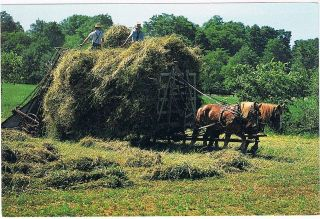 amish haymaking postcard horse drawn equipment from canada time left