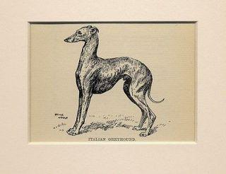 Antique Italian Greyhound Rare Dog Print by Arthur Wardle from 1912