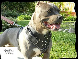 Pitbull  Rotweiler  German Sheperd Black Leather & Suede Harness