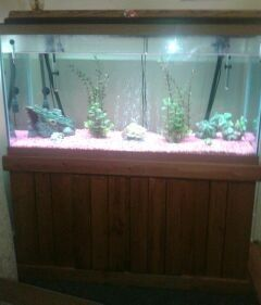 Fish tank games 90 gallon 90 gallon bowfront fish tank for 90 gallon fish tank stand