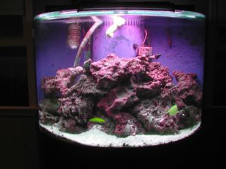 saltwater Aquarium fish tank cherry stand canopy complete live rock