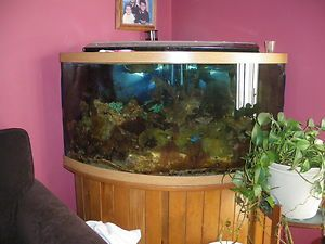 92 Gallon Corner Fish Tank With Oak Stand