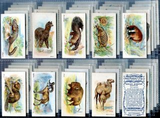 Tobacco Card Set, John Player, WILD ANIMALS OF THE WORLD, 1901