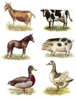 farm animals select a size ceramic decals wonderful collection of farm