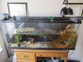 55 Gallon Aquarium Used for Aquatic Turtle