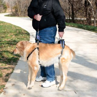 Large Dog Full Body Lift Harness for Dysplasia Injuries Surgery Older