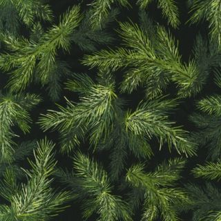 Beautiful Green Christmas Tree Branches Fabric on Black