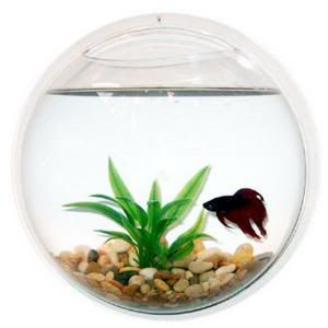 Wall Mount Fish Bowl Bubble Tank Aquarium Terrarium New