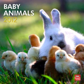 2012 Baby Animals 12 x 24 inch Wall Calendar New