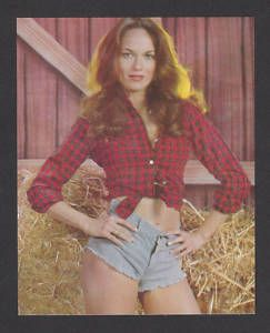 Catherine Bach Dukes of Hazzard Collector Photo Card