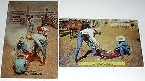 Lot of 2 Montana Rodeo Branding Missoula Culbertson Vintage Postcards