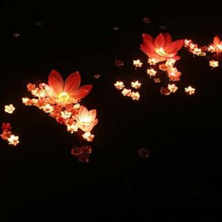 50×8 Color Flower Lotus Chinese Lanterns Wishing Floating Water Light