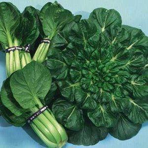Tatsoi Chinese Cabbage 300 Seeds Vigorous Asian Greens Bok Choi Pak