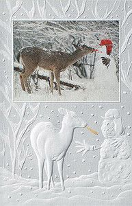 Beautiful Deer Enjoying A Treat Boxed Christmas Cards
