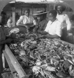 1905 photo of Picking crabs for market, on banks of Chesapeake Bay, Md
