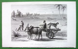 Hunting Cheetah Sports of the East   1837 Antique Print by W. Daniell