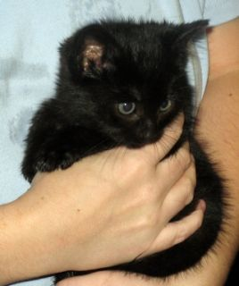 Vintage Linda Dano Black Gold Tone Necklace Cat Rescue