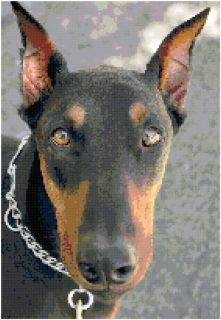 Doberman Pinscher Dog Counted Cross Stitch Pattern