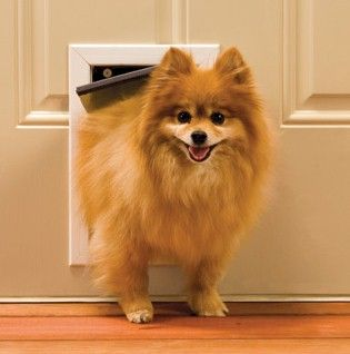 New Small Pet Dog Cat Door Panel Patio Doggie Flap Up to 15lb Dogs