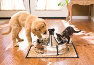 Drinkwell Stainless Steel 360 Pet Fountain Water Dish for Dogs Cats