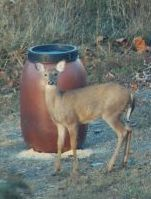 Gravity Deer Feeder Also Turkey Feeders and Hog Feeders Plain