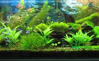 New Waterproof Aquarium Fish Tank Pool 57 LED White Light Strip Bar