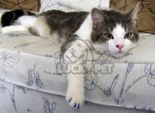 40pcs Soft Claws Nail Cap Dog Cat Scratching s M L XL