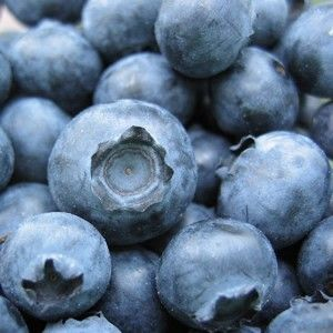Freeze Dried Blueberries Emergency Survival 1 10 Can