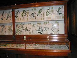 Antique Italian Art Glass Flowers Fruit Botanical Murano Vintage