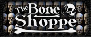 Museum Replica Human Skull Real Bone Details Deluxe Teeth Adolescent
