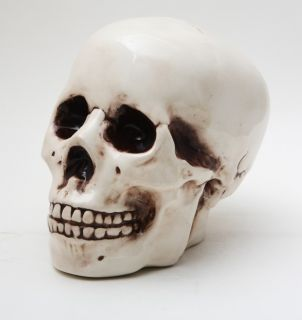 Ceramic Homosapien Skull Money Bank Statue Skeleton Figurine
