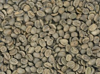 25 lb Kenya AA Green Coffee Beans