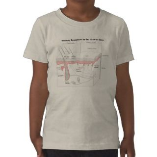 Sensory Receptors in the Human Skin Diagram Tee Shirts