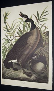 click here to see large image author john james audubon work birds of