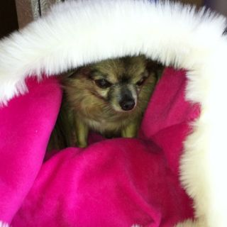 Chihuahua Puppy Dog Cream Rasberry Pink Pet Cat Bed Snuggle Sak Towie