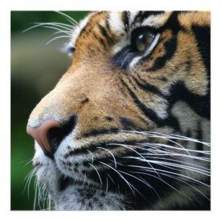 Invitaciones de la imagen del tigre comunicado personalizado