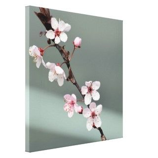 Pink Spring Blossoms Gallery Wrap Canvas