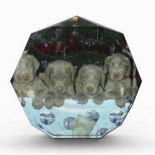 Christmas Weimaraner Puppies Awards