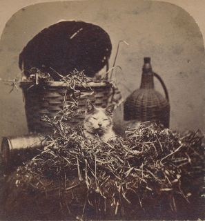 CATS SV John P Soule Kitten Series Kitty Napping c1871