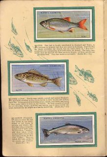 Tobacco Card Album Cards John Player Freshwater Fishes Coarse Fish 1933