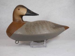 Canvasback Hen Duck Decoy Upper Chesapeake Bay MD Turned Preening Head Branded