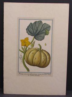 Magdalena Bouchard Color Print Botanical Pumpkin Flower